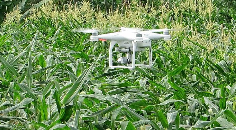 Manfaat Drone untuk Pertanian kesehatan tanaman